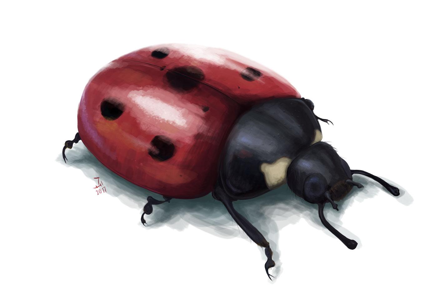 ladybug exercise - photoshop practice