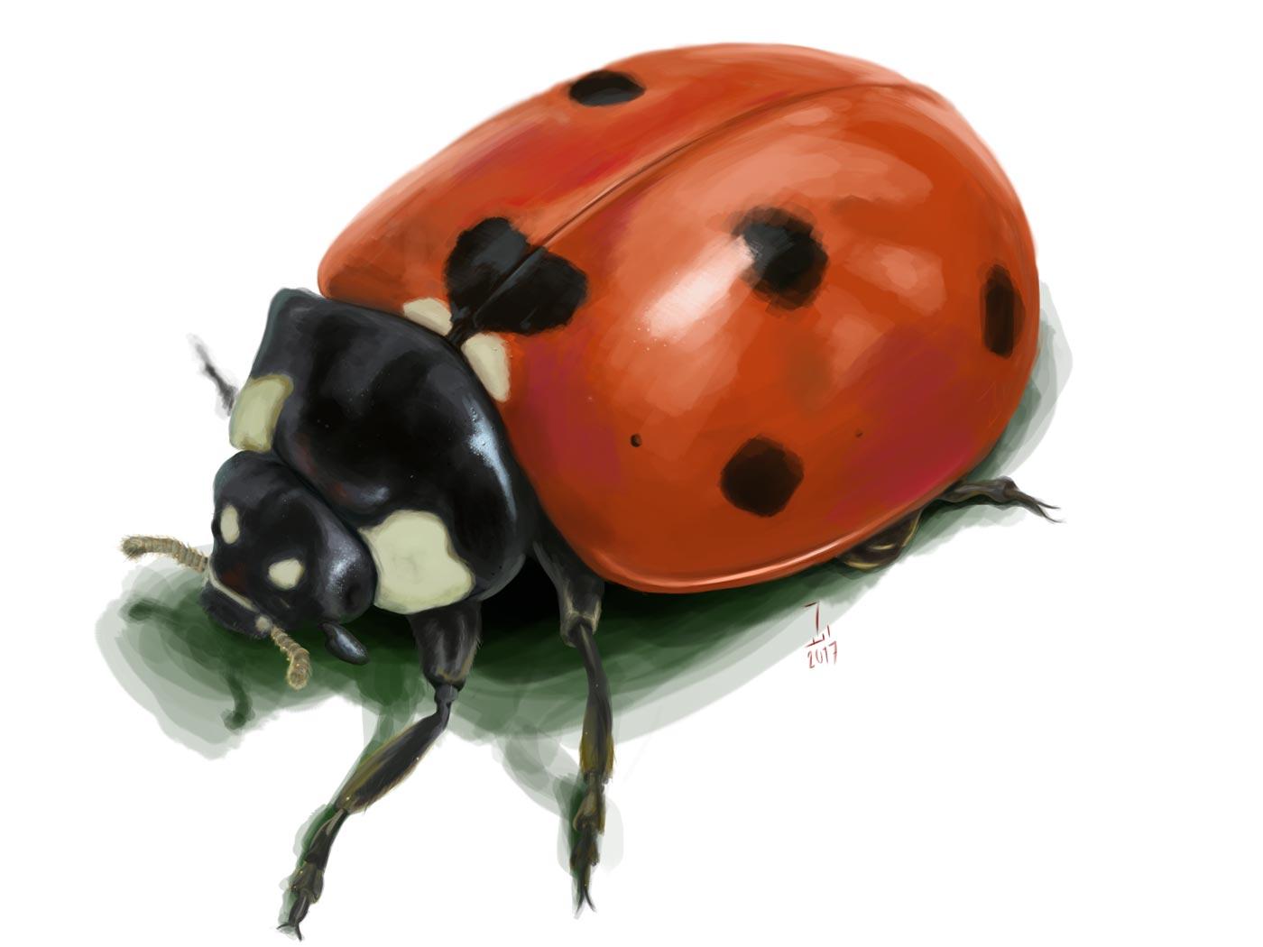Ladybug Exercise - Photoshop Practice - Ahmad Ajlouny